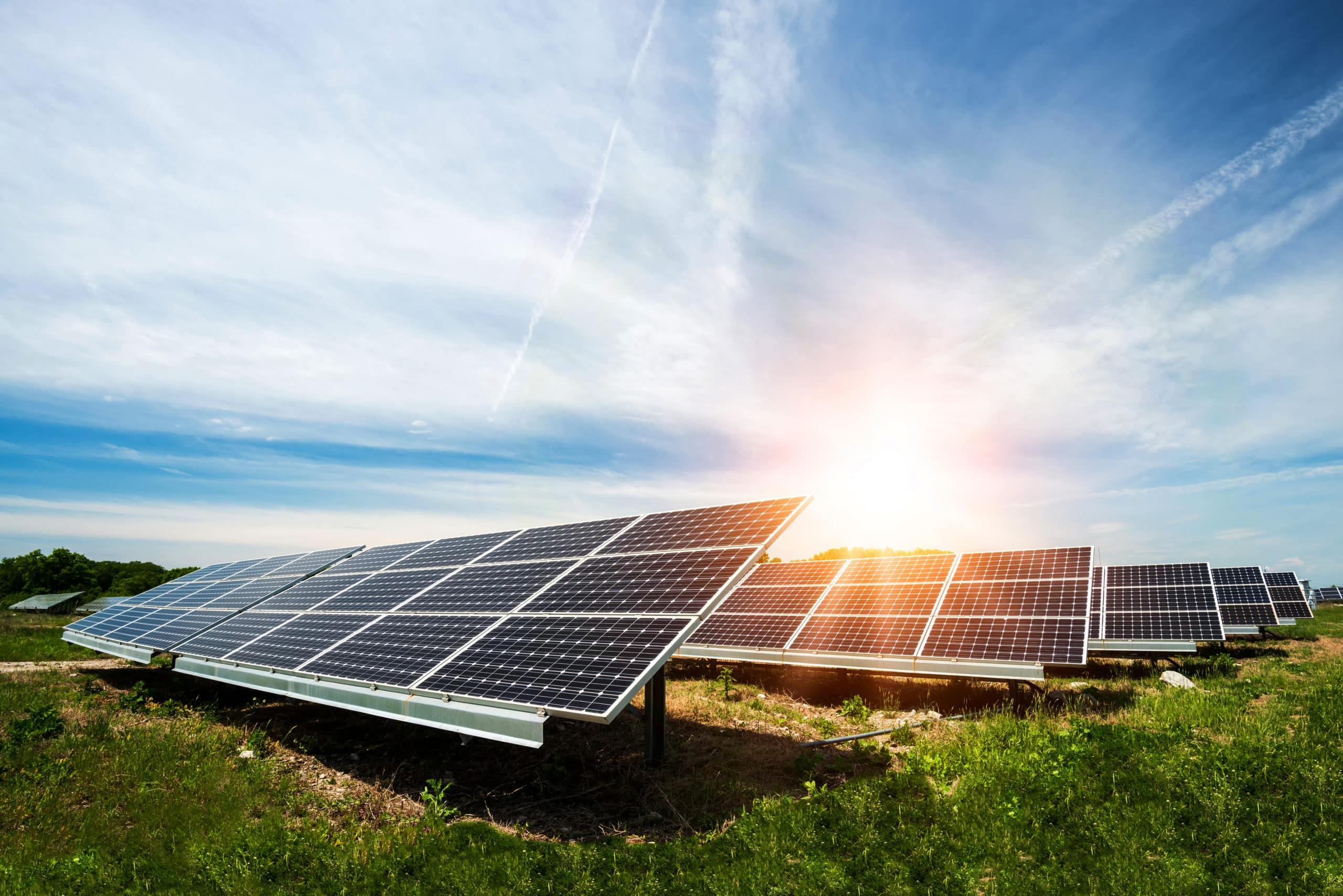 aufgestellte Solarpanel auf einer Wiese